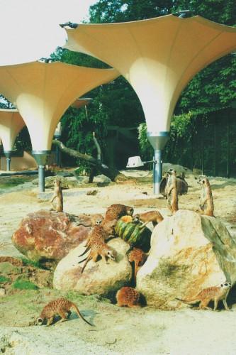 Projektbild Neubau des Erdmaennchengeheges im Koelner Zoo mit Link zur Projektseite