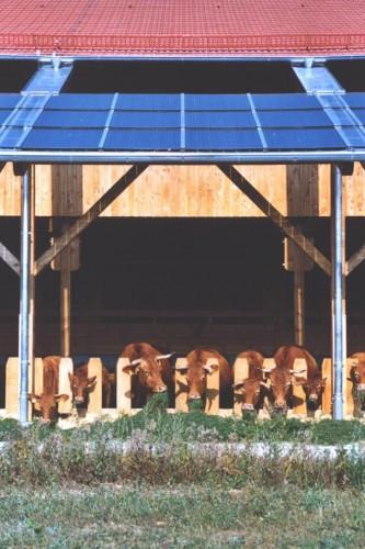 Projektbild Neubau eines Rinderstalls für Mutterkühe bei Niedernhall mit Link zur Projektseite